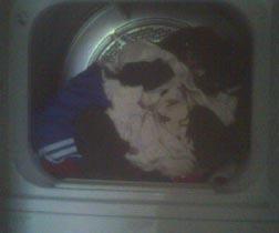 laundry in dryer