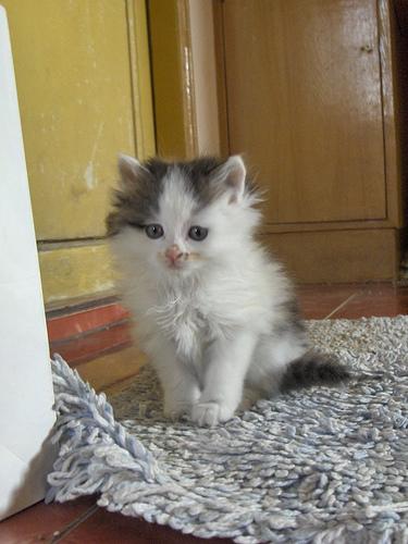 Lady Macbeth. Kitten incarnate