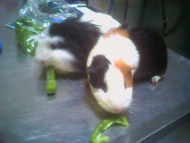 Po and Guinness eating peppers.